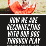 How To Reconnect with the Your Dog Through Play - Amazon Prime Video - The Pack